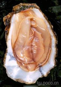 It's shellfish, really